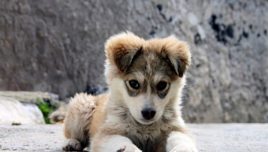 The_Puppy