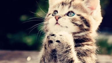 Anime-kittens-cats-praying-496315